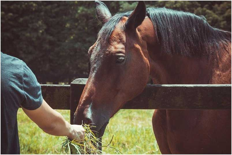 7 Ideas to Help Your Horse Health